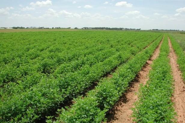 Conforman asociaciones agrícolas en comunidades del municipio de Comondú.jpg